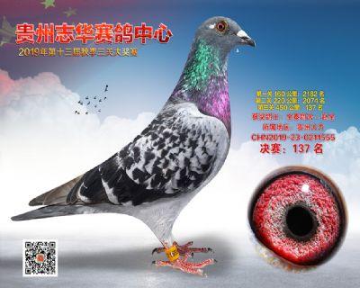 贵州志华决赛137名