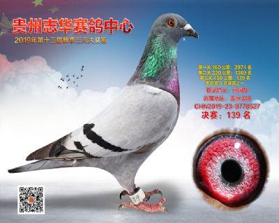 贵州志华决赛139名