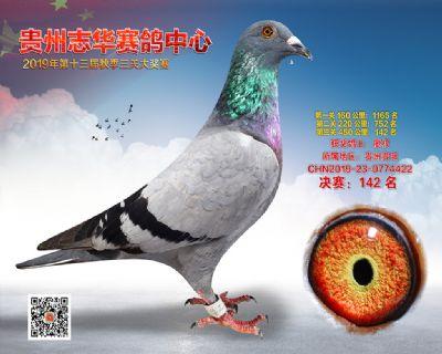 贵州志华决赛142名