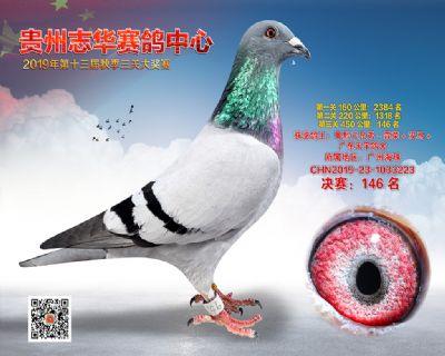 贵州志华决赛146名
