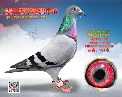 贵州志华决赛153名