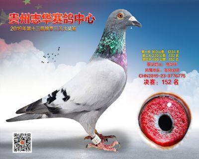 贵州志华决赛152名