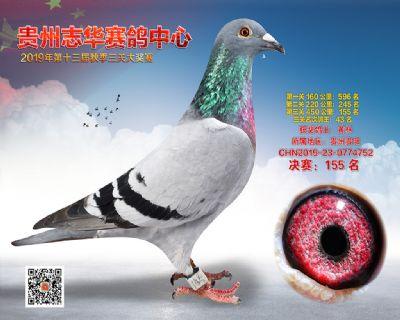 贵州志华决赛155名
