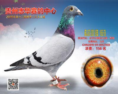 贵州志华决赛156名