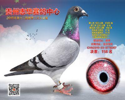 贵州志华决赛158名