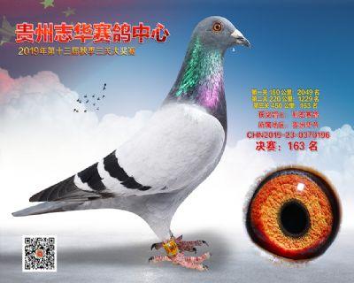 贵州志华决赛163名