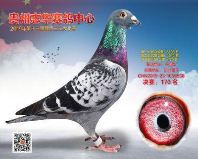 贵州志华决赛170名