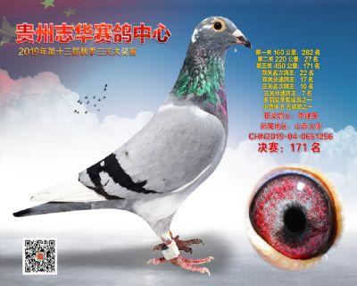 贵州志华决赛171名