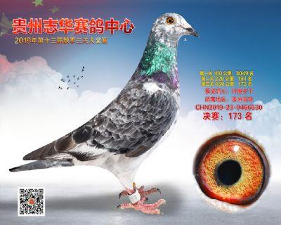 贵州志华决赛173名