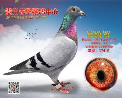 贵州志华决赛174名