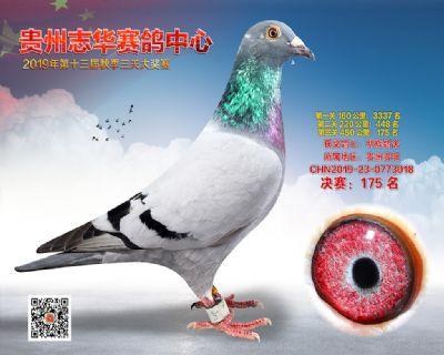 贵州志华决赛175名