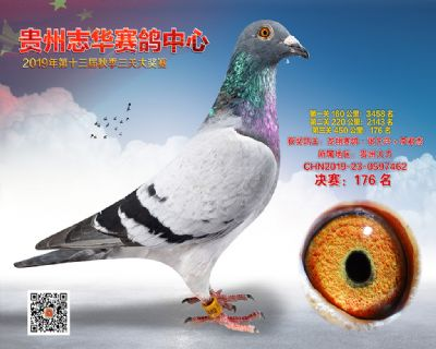 贵州志华决赛176名