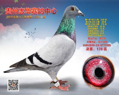 贵州志华决赛178名