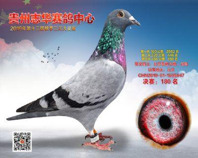 贵州志华决赛180名