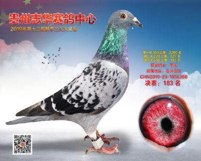 贵州志华决赛183名