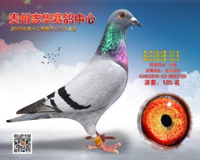 贵州志华决赛185名