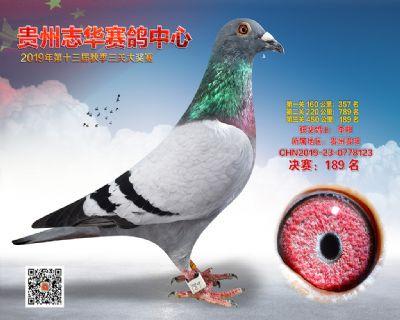 贵州志华决赛189名