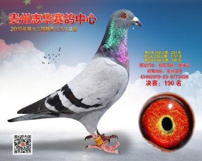 贵州志华决赛190名