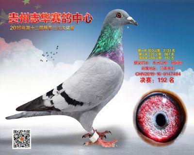贵州志华决赛192名