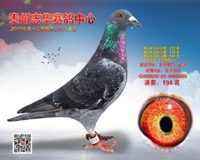 贵州志华决赛194名