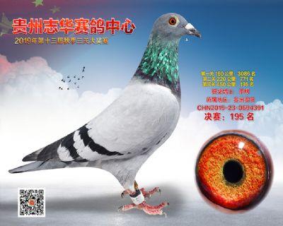 贵州志华决赛195名