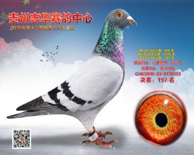 贵州志华决赛197名