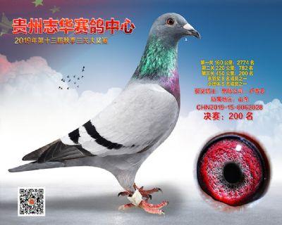 贵州志华决赛200名