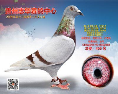 贵州志华决赛409名