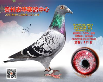贵州志华决赛411名