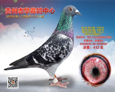 贵州志华决赛412名