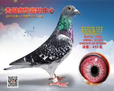 贵州志华决赛413名