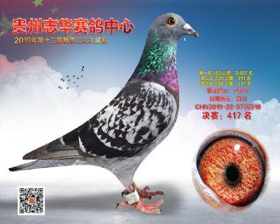 贵州志华决赛417名