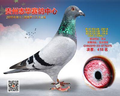 贵州志华决赛418名