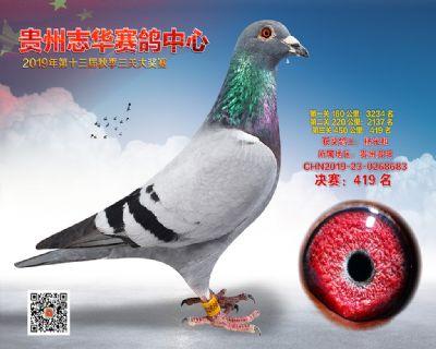 贵州志华决赛419名