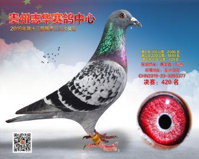 贵州志华决赛420名