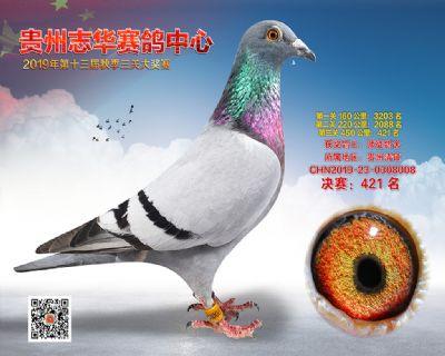 贵州志华决赛421名