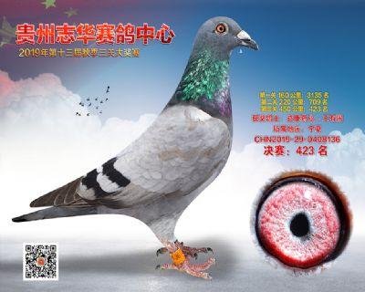 贵州志华决赛423名