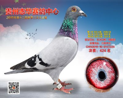 贵州志华决赛424名