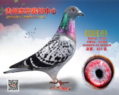 贵州志华决赛431名