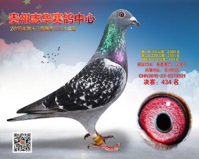 贵州志华决赛434名