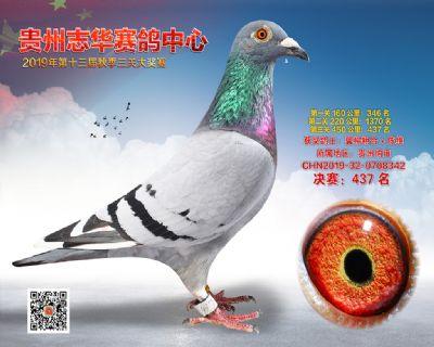 贵州志华决赛437名
