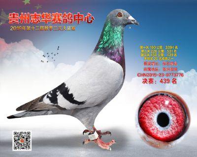 贵州志华决赛439名