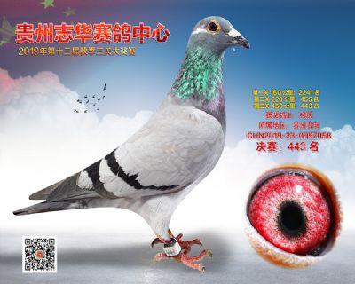 贵州志华决赛443名