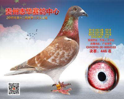 贵州志华决赛446名