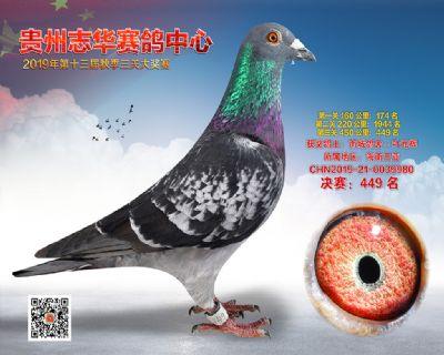 贵州志华决赛449名