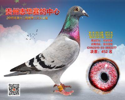 贵州志华决赛452名