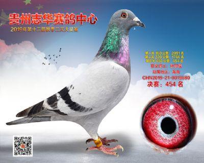 贵州志华决赛454名
