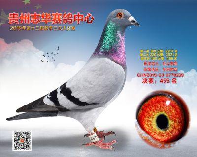 贵州志华决赛455名