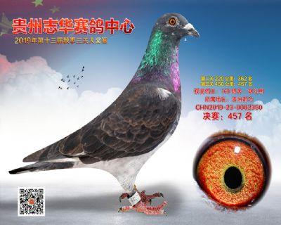 贵州志华决赛457名