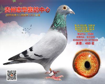 贵州志华决赛460名